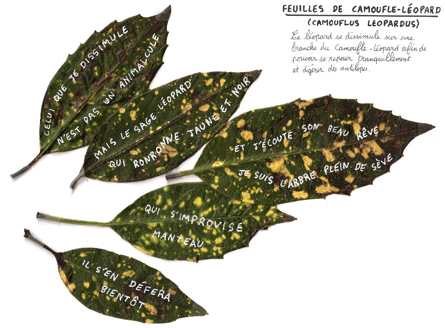 feuillescamoufleleopard